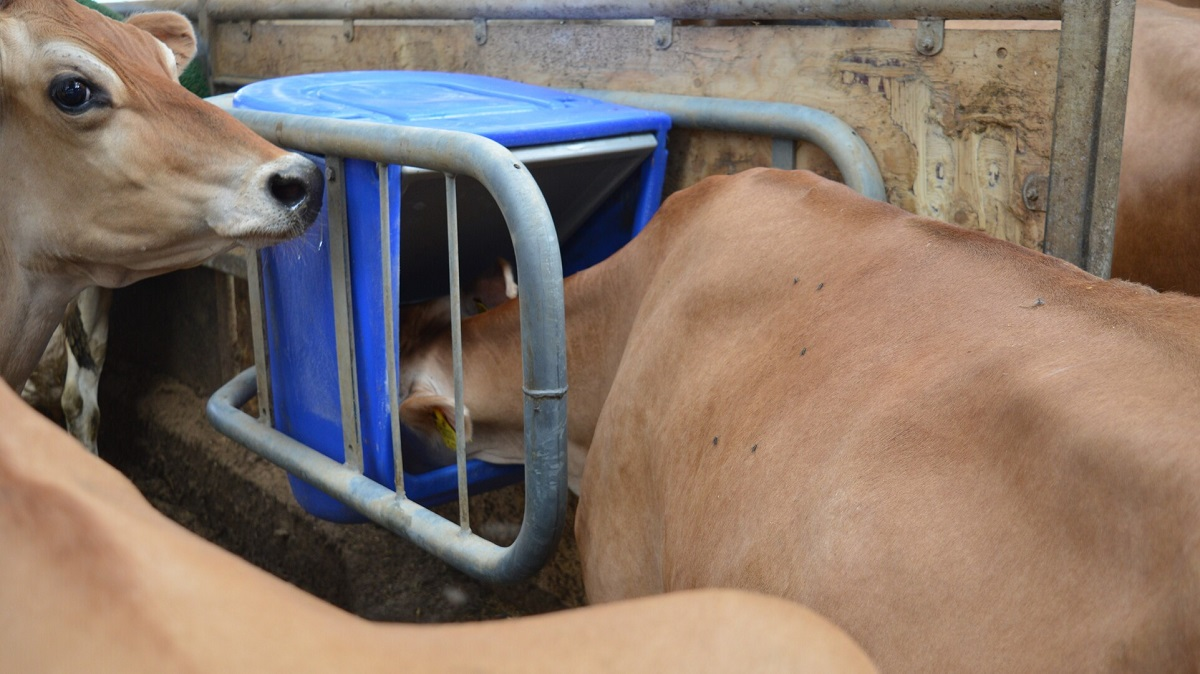 Preliminary assessment of the impact of precision mineral supplementation on dairy cow performance (updated)